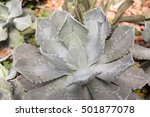 cactus. a type of cactus. | Shutterstock . vector #501877078