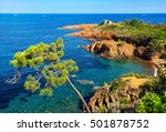 Esterel Mediterranean Tree  Re...