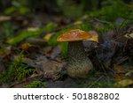 forest mushroom | Shutterstock . vector #501882802