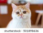 cute cat | Shutterstock . vector #501898636