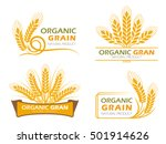 yellow paddy barley rice... | Shutterstock .eps vector #501914626