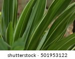 the green leaf is show in...   Shutterstock . vector #501953122