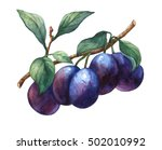 branch with leaves and plums.... | Shutterstock . vector #502010992
