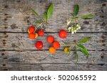 delicious fresh arbutus fruits... | Shutterstock . vector #502065592
