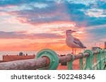 Seagull Standing On A Fence...