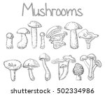mushrooms forest edible oyster... | Shutterstock .eps vector #502334986