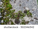 Green Moss On Wall   Concrete...