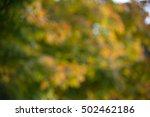 autumn nature blur bokeh...   Shutterstock . vector #502462186