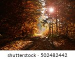 road in autumn forest | Shutterstock . vector #502482442
