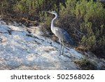 lake birds | Shutterstock . vector #502568026
