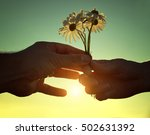 hand gives a flowers... | Shutterstock . vector #502631392