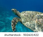 sea turtle | Shutterstock . vector #502631422