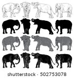 set of wild elephant isolated...   Shutterstock .eps vector #502753078