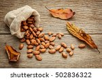 cocoa bean in hemp sack on the... | Shutterstock . vector #502836322