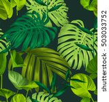 vector illustration of monstera ...   Shutterstock .eps vector #503033752