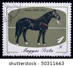 Small photo of HUNGARY - CIRCA 1985: A stamp printed in Hungary shows Racehorse named Nonius XXXVI, circa 1985