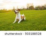 Playfull Small Dog On Green...