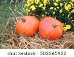 Orange Pumpkins On The Straw...