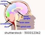 human brain concept  | Shutterstock . vector #503312362