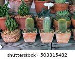 Little Cactus Plant In The...