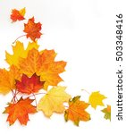 bright autumn leaves of maple... | Shutterstock . vector #503348416