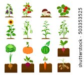 plant set icons in cartoon... | Shutterstock .eps vector #503353525
