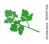 parsley. vector illustration | Shutterstock .eps vector #503397436