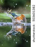 Small photo of Wild Common Kingfisher (Alcedo atthis) emerging from water with a fish