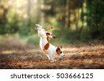Stock photo dog jack russell terrier jump over the leaves autumn mood 503666125