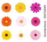 Colorful Daisies  Isolated On...
