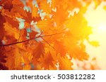 oak branch with red leaves in... | Shutterstock . vector #503812282