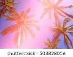 coconut tree at tropical coast... | Shutterstock . vector #503828056