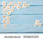 chamomile flower over blue... | Shutterstock . vector #503835205