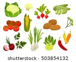 farm vegetables isolated vector ... | Shutterstock .eps vector #503854132