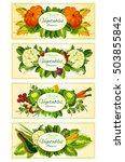 farm and garden vegetables... | Shutterstock .eps vector #503855842
