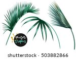 vector palm leaves  jungle leaf ... | Shutterstock .eps vector #503882866