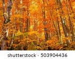 autumn leaves in yamagata japan   Shutterstock . vector #503904436