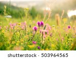 beautiful landscape with the... | Shutterstock . vector #503964565