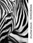 monochromatic image of a the... | Shutterstock . vector #504028066