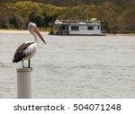 Australian Pelican Standing On...