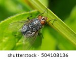 little fly | Shutterstock . vector #504108136