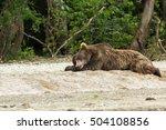Brown Bear Sleeping Sweetly On...