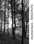 forest | Shutterstock . vector #504229192