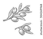 olives on branch with leaves.... | Shutterstock .eps vector #504269968
