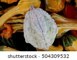 Warty Pear Gourd  Cucurbita...