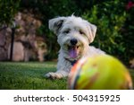 Stock photo dog waiting for the ball 504315925