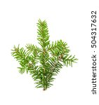 pine sprig. branches of... | Shutterstock . vector #504317632