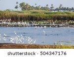 Migratory Birds On The Banks O...