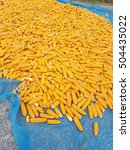 Small photo of agriculturist take a cob to sun bath for moisture