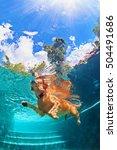 underwater funny photo of... | Shutterstock . vector #504491686